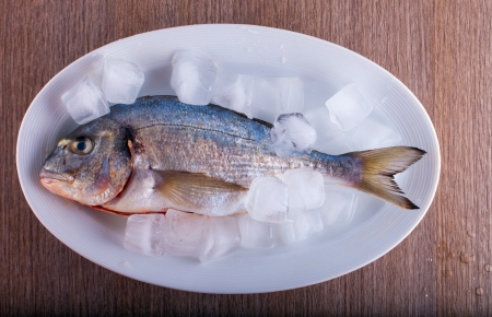 A bream with ice in a white plate photo