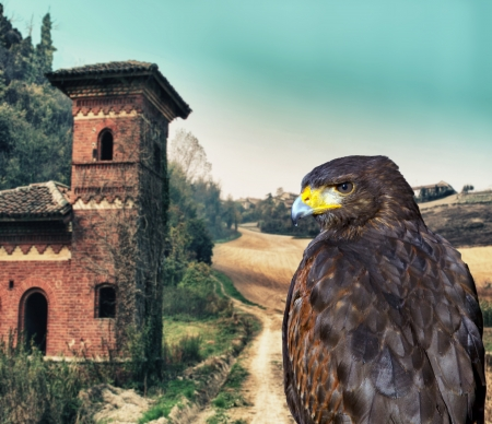 Close up of an hawk over castle background