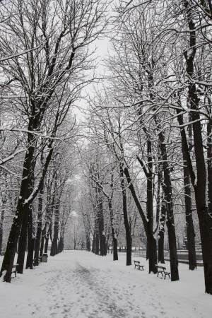 A road with snow and winter trees photo