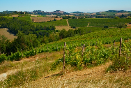 A landscape of a vineyard on a hill photo