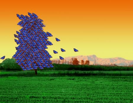 morpho: Tree full of blue butterflies, over sunset sky