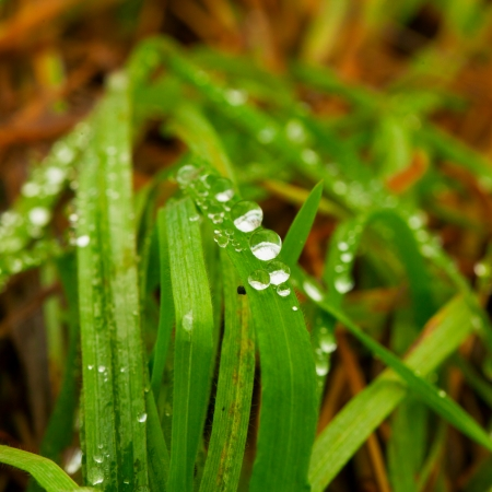 Drops of water over blades of grass