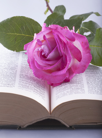 White and pink rose over open book photo