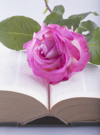 White and pink rose over open book, focus on the rose photo