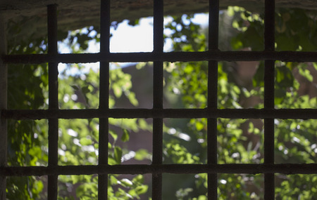 Barred window with trees on the outside photo