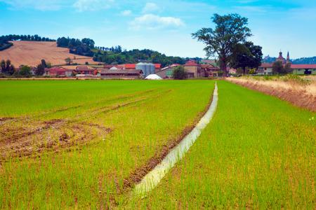 furrow: Rice field with long furrow pointing towards a farm Stock Photo