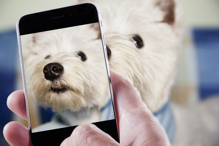 Male hand with smartphone taking a photo of a dog Фото со стока