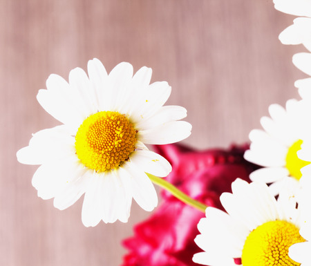 white daisy: White daisy in a bunch, close up, horizontal image