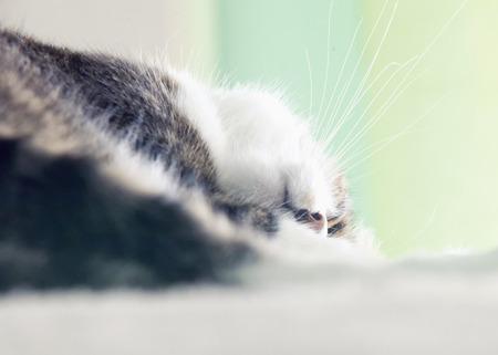 upside down: Sleeping cat head upside down, horizontal image Stock Photo