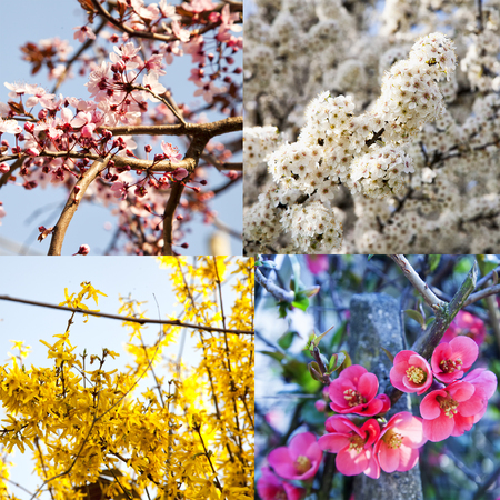 square image: Four different kind of flowers, square image