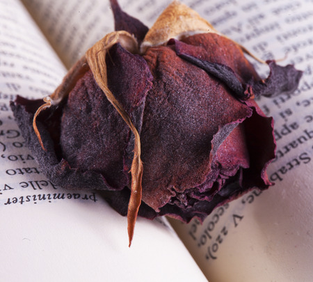 old letters: Dried rose over book, close up, horizontal image Stock Photo