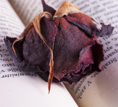 cartas antiguas: Secado se levantó sobre el libro, de cerca, horizontal de la imagen Foto de archivo