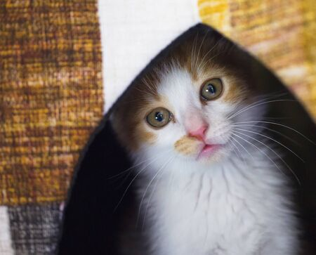 Funny red and white kitten, close up, horizontal image