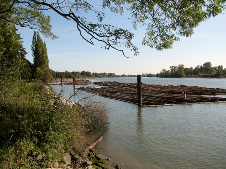 Raw logs floating down the river. 版權商用圖片