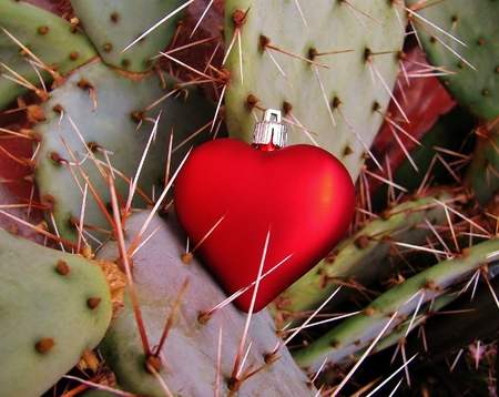 love hurts: Red heart caught on the sharp thorns of a cactus