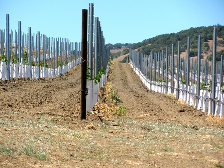Modern winery