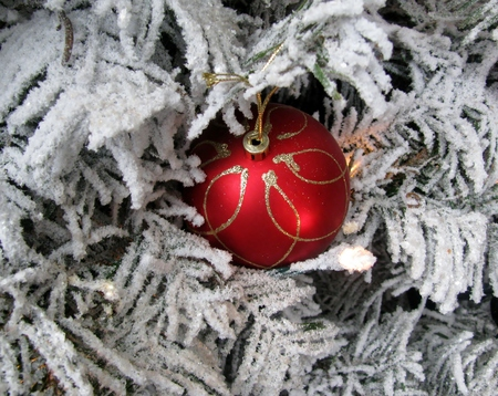Red Christmas ball hanging on a white tree branch