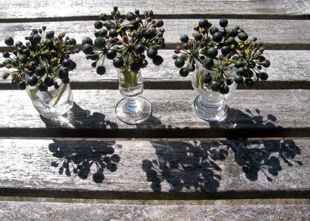Hedera hibernica berries Stock Photo