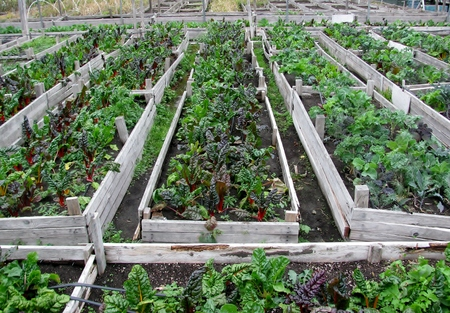 Vegetable garden in urban community