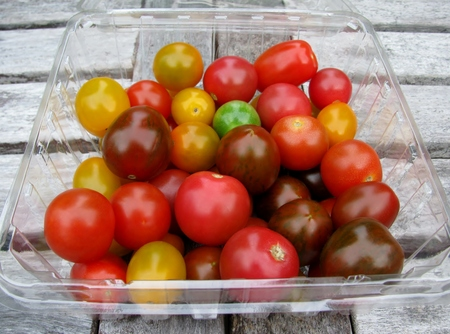 Assorted fresh organic colorful tomatoes in a plastic container on a wooden table