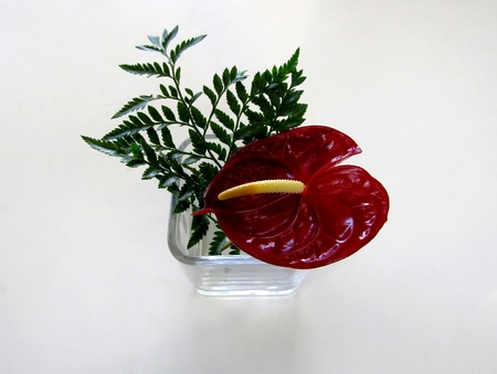 Red Anthurium andraeanum flower and fern branch in glass vase Imagens