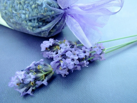 Dried lavender in bag and fresh flowers Imagens