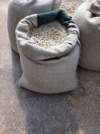 Raw coffee beans in burlap sacks