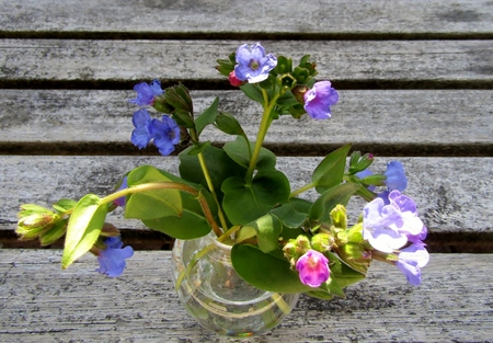 Pulmonaria or lungwort flowers in a glass vase