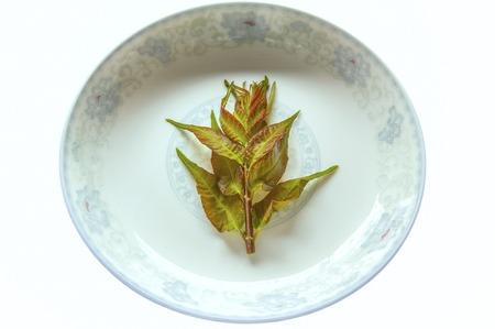 Toona sinensis leaves 免版税图像