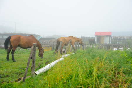 pastoral: Pastoral courtyard