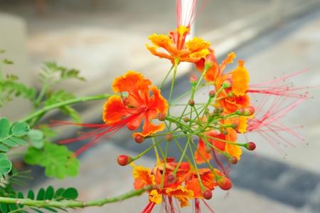 tropical shrub: flower