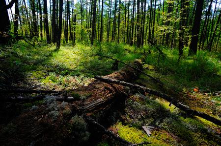 deadwood: Moore Road, GA da hinggan mountains in Inner Mongolia national forest park landscape Stock Photo