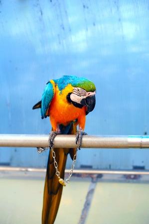 cross bar: Macaw