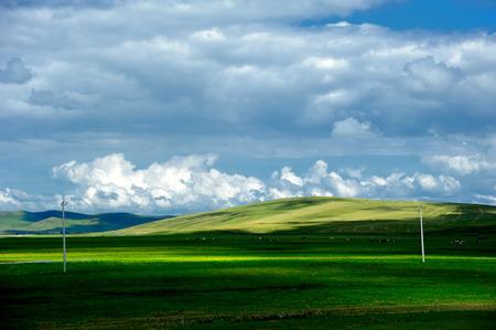grassland: Inner Mongolia hulunbeier grassland scenery
