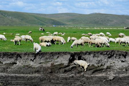 inner mongolia: Sheep River in Inner Mongolia
