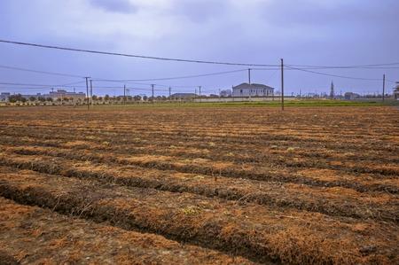 barren: Barren field Stock Photo