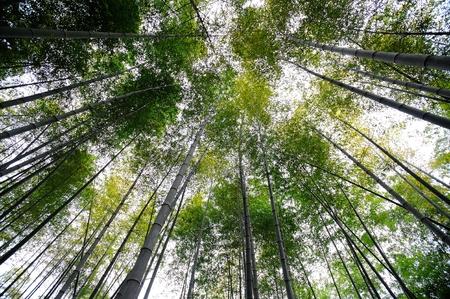 loess: bamboo grove