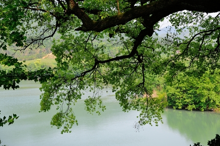 riverside: The riverside trees Stock Photo
