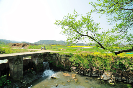 pastoral scenery: China Southern pastoral scenery