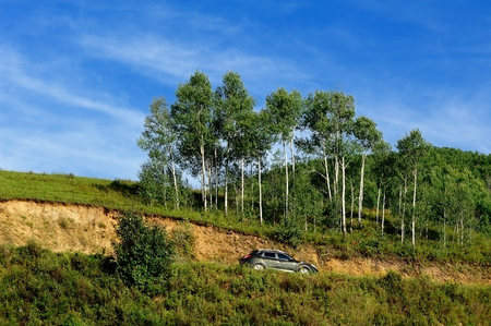 birch forest: Mongolia Hill Road and birch forest Stock Photo