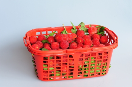 shu: A basket of red berries