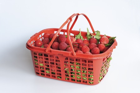shu: Red bayberries in a basket