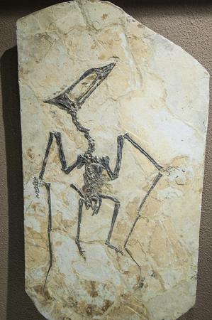 fossils: Small dinosaur fossils Editorial
