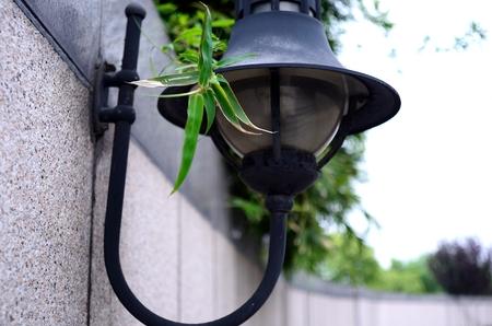 bamboo leaf: street lamp next to a bamboo leaf