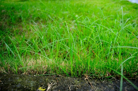 feature: Manual lawn feature