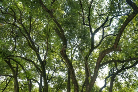 The canopy of summer trees Banco de Imagens