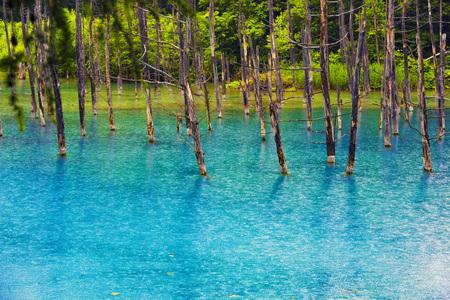 Hokkaido mei ying green pool