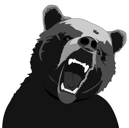 angry bear: Ilustraci�n de oso enojado sobre fondo blanco  Vectores