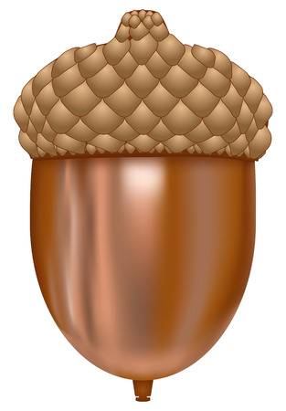 Illustration von Acorn auf weißem Hintergrund