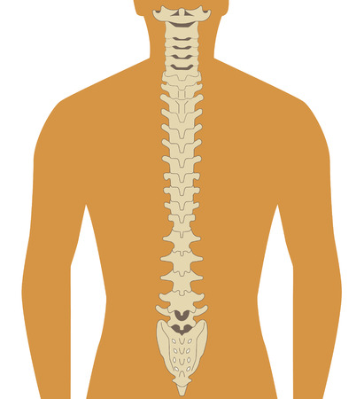 spine surgery: human silhouette with spine illustration  Illustration